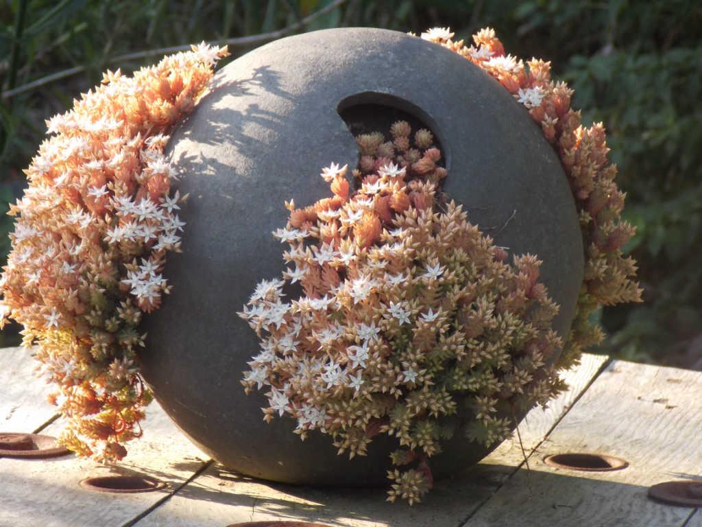 Sphère végétalisée