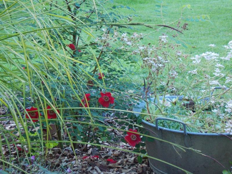 jardin de la poterie