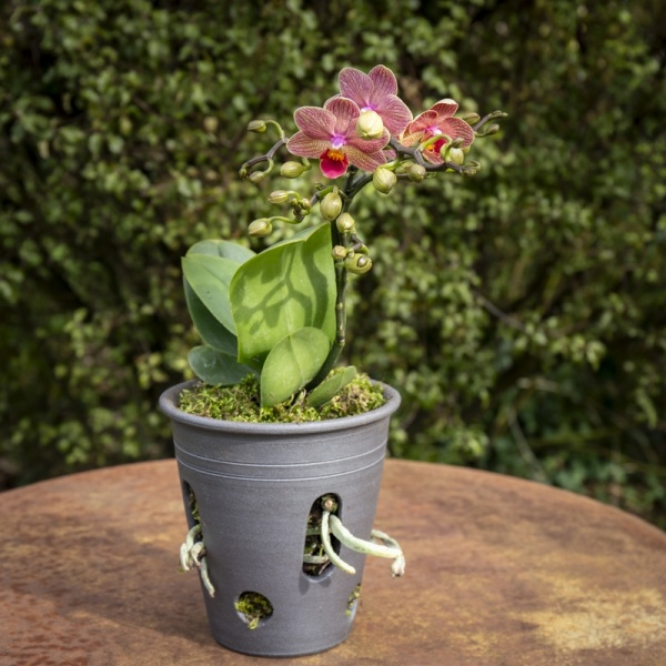 pot pour orchidée et fougère