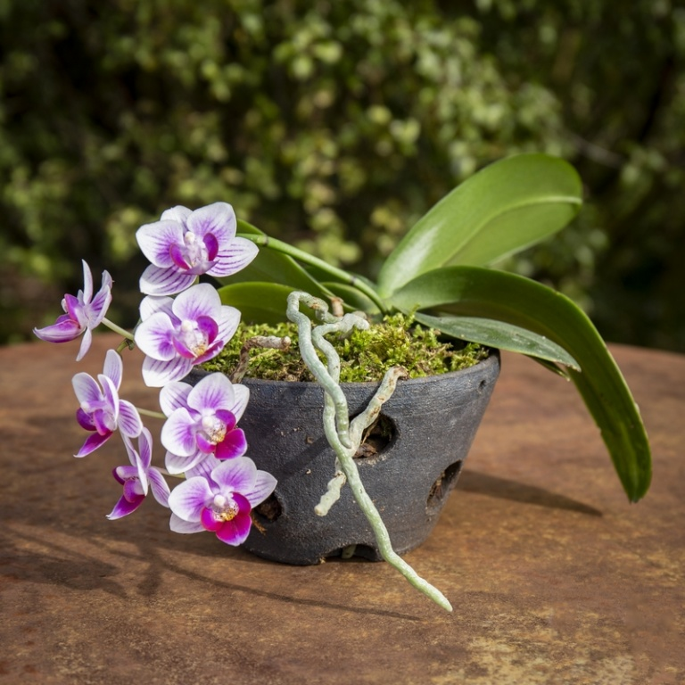pot pour orchidée